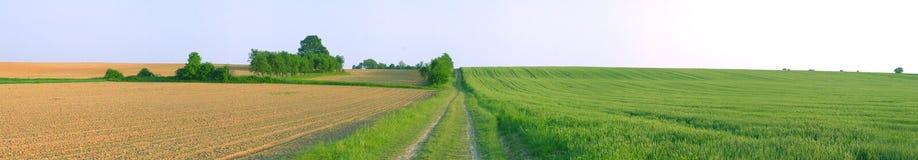 Frühlingsfeldpanorama Stockbild