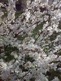 Frühlingsfest Stockfoto