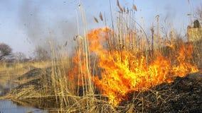Frühlingsfeuer von trockenen Schilfen nähern gefährlich sich Häusern des Dorfs durch Fluss stock video