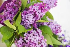 Frühlingsfliederblumenstrauß stockbild