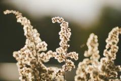 Frühlingsflora Stockfotos