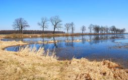 Frühlingsflut Stockfoto