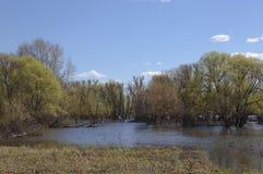 Frühlingsfluten lizenzfreie stockfotografie