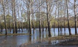 Frühlingsfluten lizenzfreies stockfoto