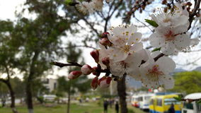 Frühlingsfoto Stockbild