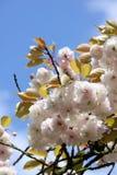 Frühlingsfrische Stockbild