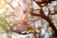 Frühlingsfrische Stockbilder