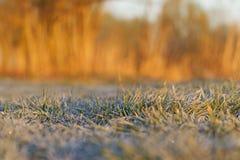 Frühlingsfrost auf dem grünen Gras lizenzfreie stockfotos