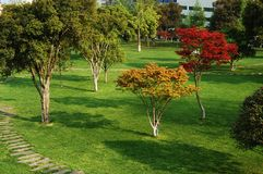 Frühlingsgarten Stockfotos