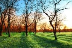 Frühlingsgarten Lizenzfreie Stockbilder