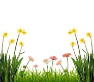 Frühlingsgarten, getrennt Stockfotos