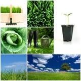 Frühlingsgartenarbeit Stockfoto
