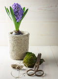 Frühlingsgartenblume lizenzfreie stockfotos