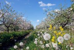 Frühlingsgartenschlag Stockfoto