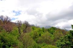 Frühlingsgebirgswald mit hängenden Wolken Stockfotografie