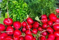 Frühlingsgemüse - Zwiebel, Rettich, Dill, Salat für Verkauf Lizenzfreie Stockfotografie
