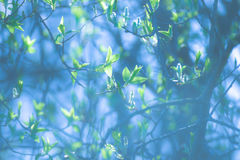 Frühlingsgrün Stockbilder