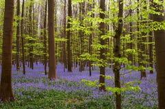 Frühlingsgrüns und -BLAU Stockfotos