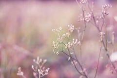 Frühlingsgras-Blumenfeld im weich purpurroten und rosa Hintergrund Stockfotos