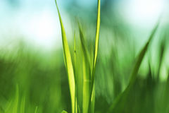 Frühlingsgras an einem sonnigen Tag lizenzfreies stockfoto