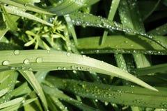 Frühlingsgras? Grün, frisch und gesund stockfoto