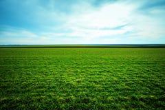 Frühlingsgras wächst auf dem Feld Stockbilder