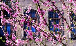 Frühlingsgrenz- oder -hintergrundkunst mit rosa Blüte Stockfotografie