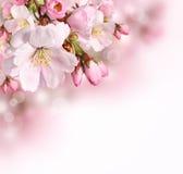 Frühlingsgrenzhintergrund mit rosa Blüte lizenzfreies stockbild