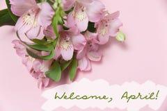 Frühlingsgruß mit Blumen Alstroemeria Wods-Willkommen, April Draufsicht, flache Lage Stockbilder