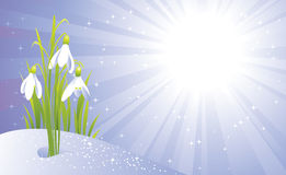 Frühlingsgrußkarte Lizenzfreie Stockfotos