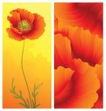 Frühlingsgrußkarte mit Mohnblume Lizenzfreie Stockfotografie