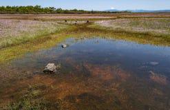 Frühlingshafte Pool-und Wildflowers-auf dem Tisch Felsen in Oregon lizenzfreie stockfotografie