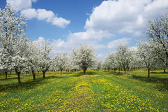 Frühlingshaftes Blühen. Stockbild