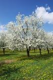 Frühlingshaftes Blühen. Stockfoto