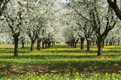 Frühlingshaftes Blühen. Lizenzfreies Stockfoto