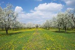 Frühlingshaftes Blühen. Lizenzfreie Stockfotos