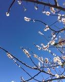 Frühlingshimmel stockfoto