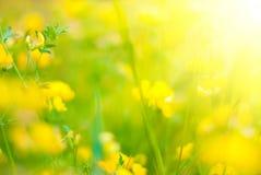 Frühlingshintergrund Stockfoto