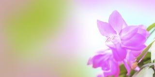 Frühlingshintergrund für die Websitefahne Lizenzfreie Stockbilder