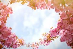 Frühlingshintergrund mit blühender japanischer orientalischer Kirsche Kirschblüte Lizenzfreies Stockbild