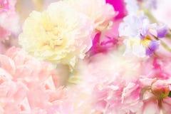 Frühlingshintergrund mit Blumen Lizenzfreie Stockfotos