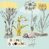 Frühlingshintergrund mit Blumen und Vogel Stockbild