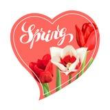Frühlingshintergrund mit den roten und weißen Tulpen Schöne realistische Blumen, Knospen und Blätter Lizenzfreie Stockfotografie