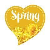 Frühlingshintergrund mit flaumigen gelben Tulpen Schöne realistische Blumen und Knospen Stockfotografie