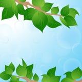 Frühlingshintergrund mit grünen Blättern Lizenzfreie Stockfotos