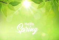 Frühlingshintergrund mit grünen Blättern