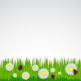 Frühlingshintergrund mit Graskamille Stockfoto