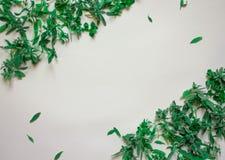 Frühlingshintergrund mit jungen Grünpflanzen und Blättern auf weißem Draufsicht-Kopienraumfachwerk des Hintergrundes lizenzfreie stockbilder