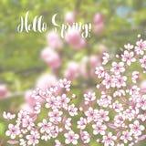 Frühlingshintergrund mit Kirschblüte Stockfoto