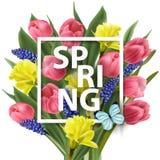 Frühlingshintergrund mit mit Frühling blüht, Tulpen, Narzissen, Muscari Vektor lizenzfreie abbildung